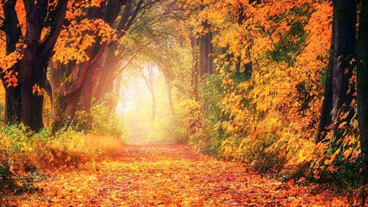 otoño mindfulness